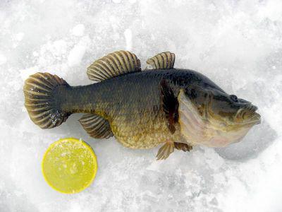 Ловля ротана зимой: посижу, «головешек» наловлю, зимняя цвета латуни или меди