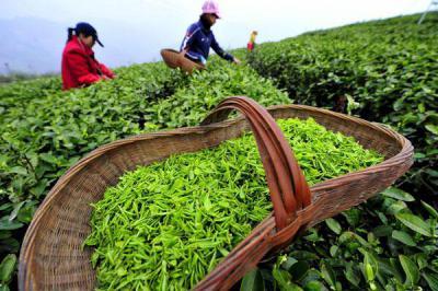 Изображение - Зеленый чай для суставов польза и вред 610510