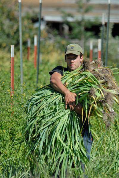 Изображение - Кто выращивает овощи 643521