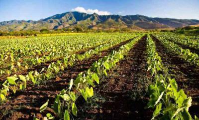 Изображение - Кто выращивает овощи 643525