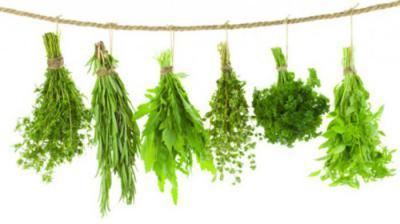 Какими травами можно подавить пролактин диеты для похудания.