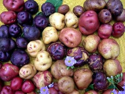 Настойка из цветков картошки для суставов как помочь суставам пальцев рук