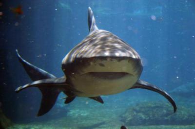 Изображение - Акула мазь для суставов 975564