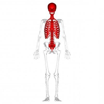 Изображение - Суставы осевого скелета 976862
