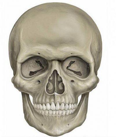 Изображение - Суставы осевого скелета 976878
