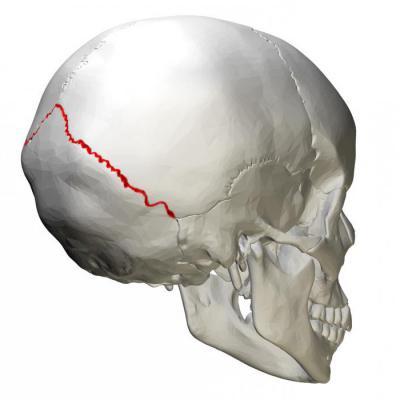 Изображение - Суставы осевого скелета 976888