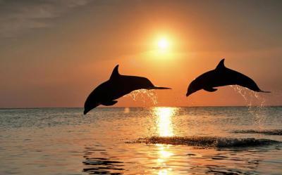 Дельфины не имеют голосовых связок