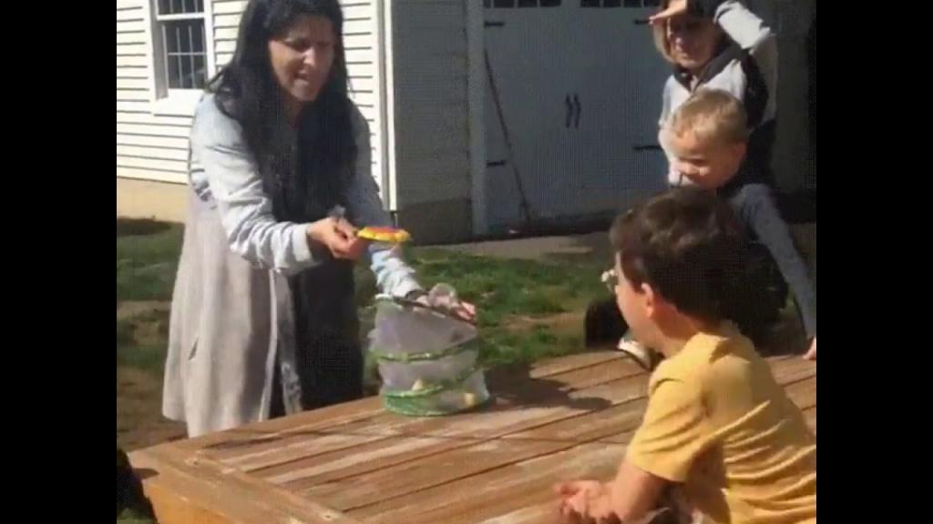 Мама хотела красиво выпустить бабочку, однако что-то пошло не так (видео)
