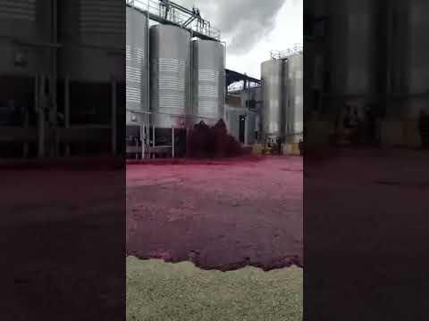 Испанский производитель вина потерял 50 000 литров напитка: прорвало резервуар (видео)