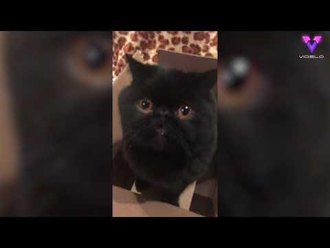 Чёрный кот с оранжевыми глазами полюбился общественности: весёлое видео