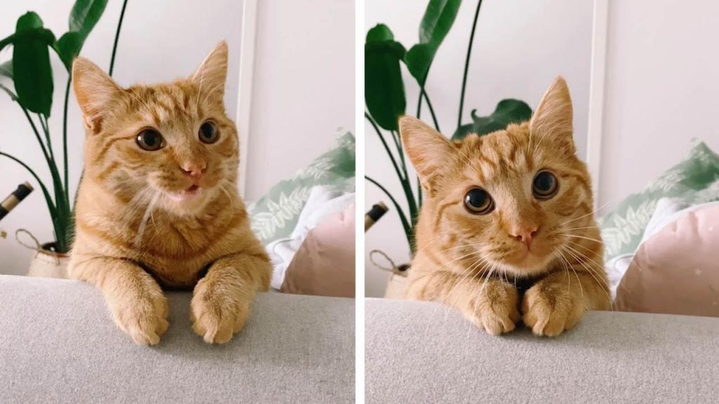 """Восхитительный котенок сумел повторить взгляд Кота в сапогах из """"Шрека"""" (милое видео)"""