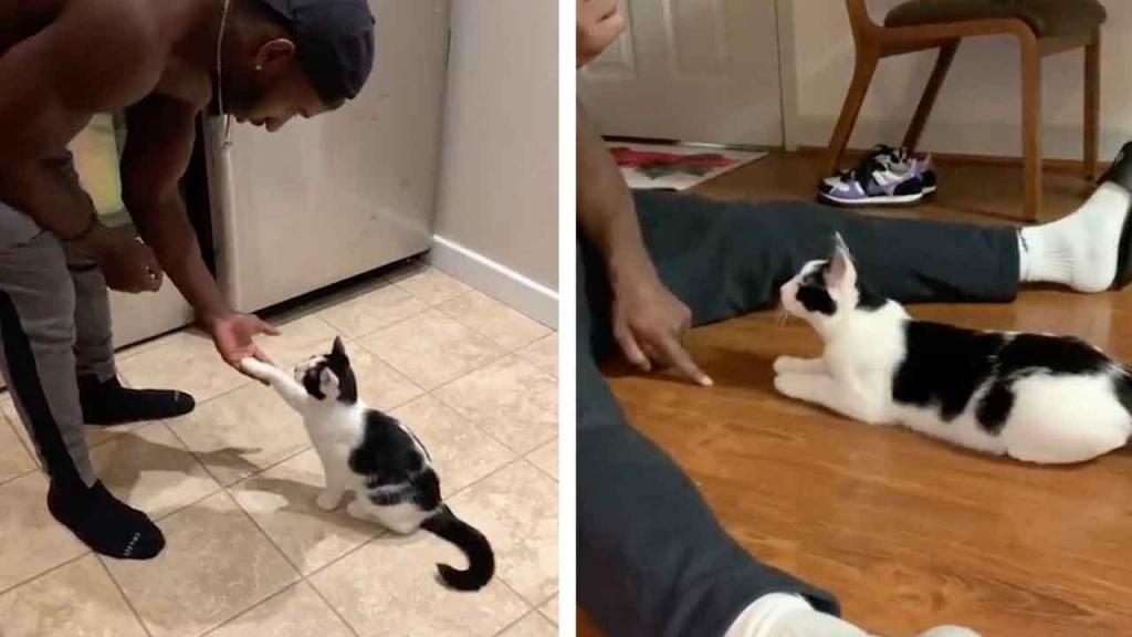 """""""Сидеть, лежать, дай лапу!"""": котенок выполняет команды не хуже собаки (видео)"""