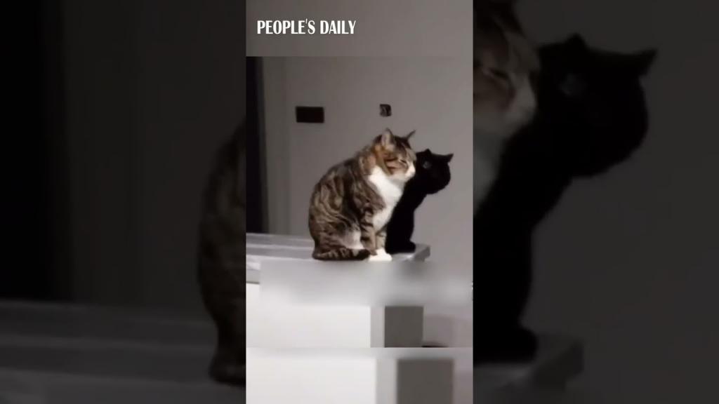 Тень на стене оказалась живой: кошки покорили Сеть своей синхронностью (видео)